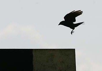 trijų juodų varnų simbolika