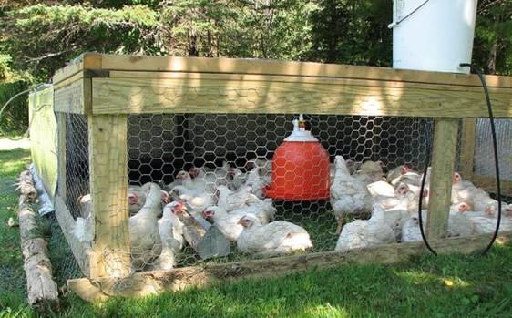 integruotų paukščių kokcidiozės kontrolės strategijų variantai