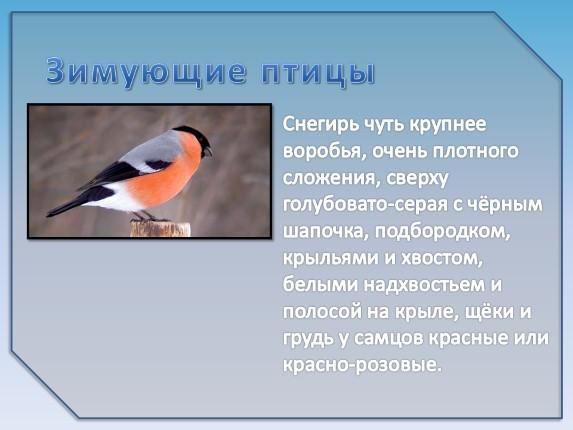 paukščių, kovoti, kraštovaizdį, juoda ir balta, juoda, balta, paris