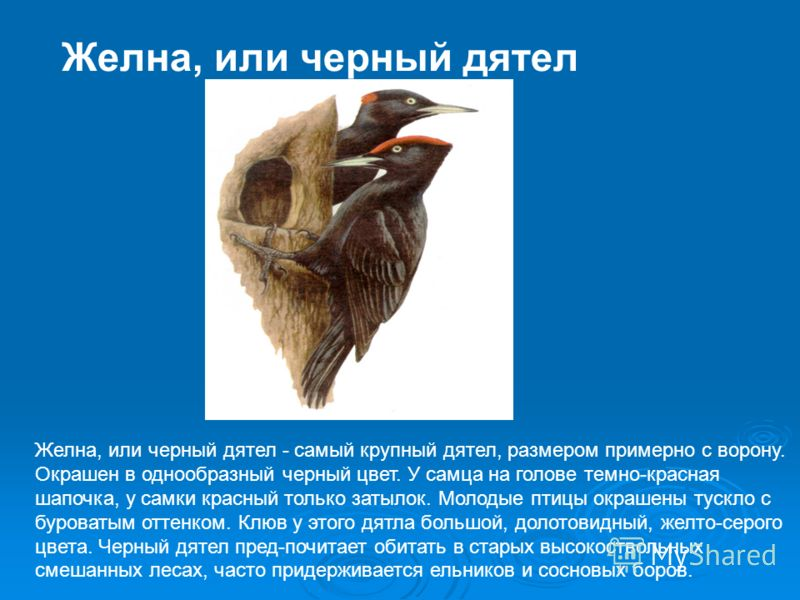trijų juodų varnų santrauka)
